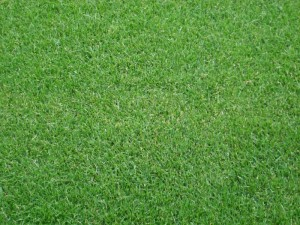 Poza 1 Gazon Sport Turf -import- (1mp/rulou)