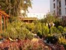 Magazin de plante de gradina, arbori, arbusti, gazon, instalatii de irigatii si servicii de amenajare si intretinere gradini.