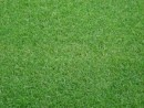 Gazon Sport Turf -import- (1mp/rulou)