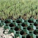 Geogrila pavele inierbate (4 buc/mp)